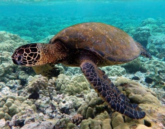 Κρήτη: Πως οι έρευνες για πετρέλαιο απειλούν τις σπάνιες χελώνες