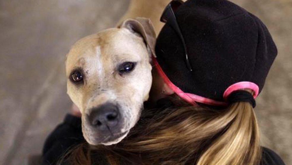 Επικήρυξαν τους δράστες της νεκρής σκυλίτσας- Σκληρό video