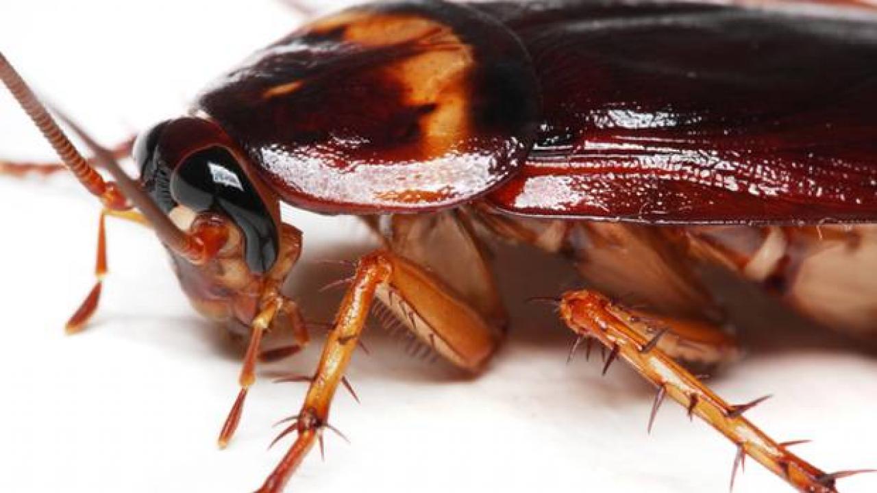 Εντοπίστηκε κατσαρίδα μέσα σε ψωμάκι, σε Δημοτικό Σχολείο - Έντονες διαμαρτυρίες & καταγγελίες