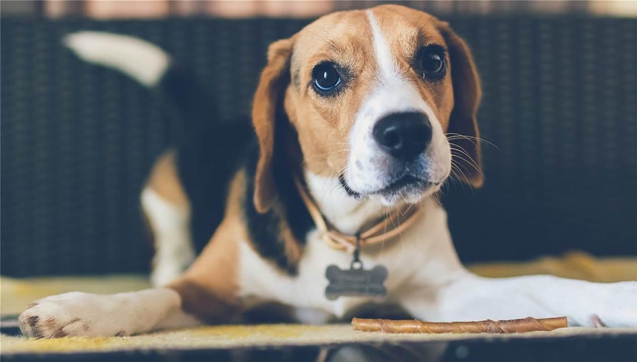 Απίστευτη κτηνωδία στα Χανιά: Πυροβόλησαν & κάρφωσαν σκύλο