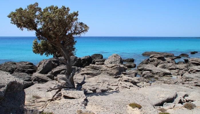 Τιρκουάζ νερά, κέδροι και λευκή άμμος (φωτο)
