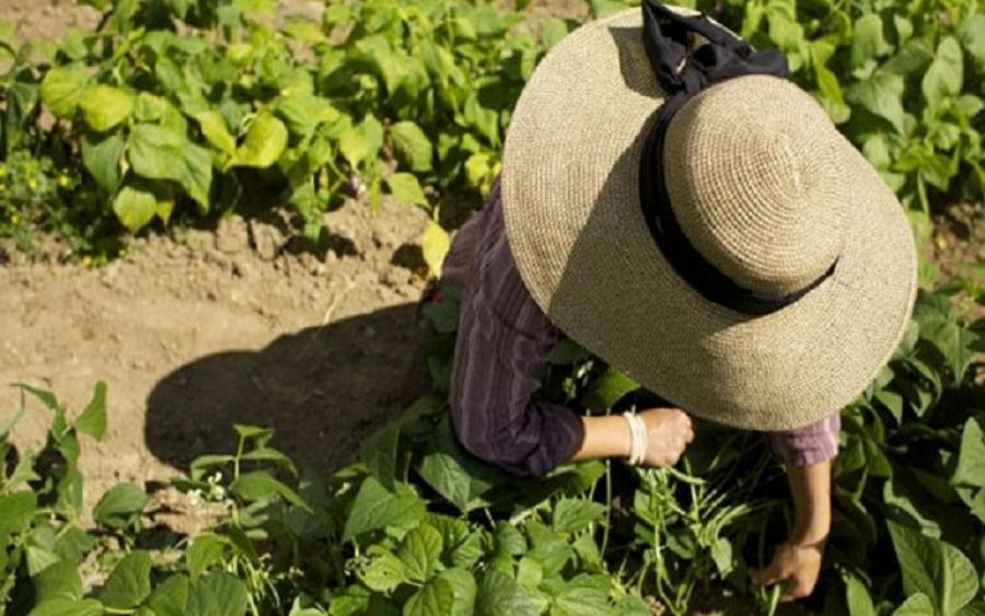 22 χρόνια αγρότισσα και όμως… το σύστημα δεν την αναγνωρίζει