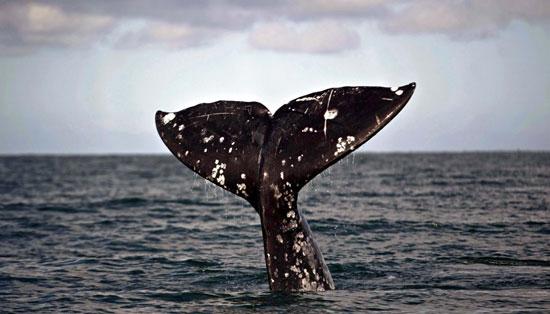 Φρίκη: Βρήκαν 1.000 κομμάτια πλαστικού στο στομάχι φάλαινας