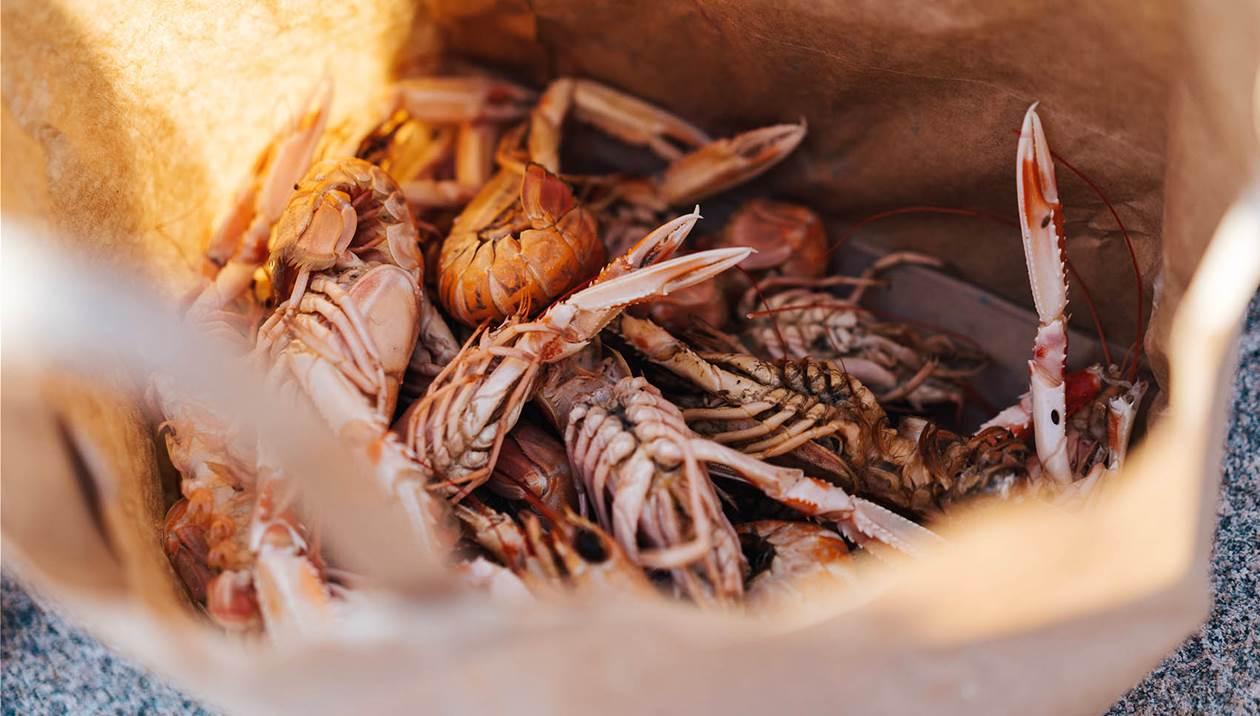 «Φτερά» έκανε μισός τόνος γαρίδας από σκάφος στο Ηράκλειο