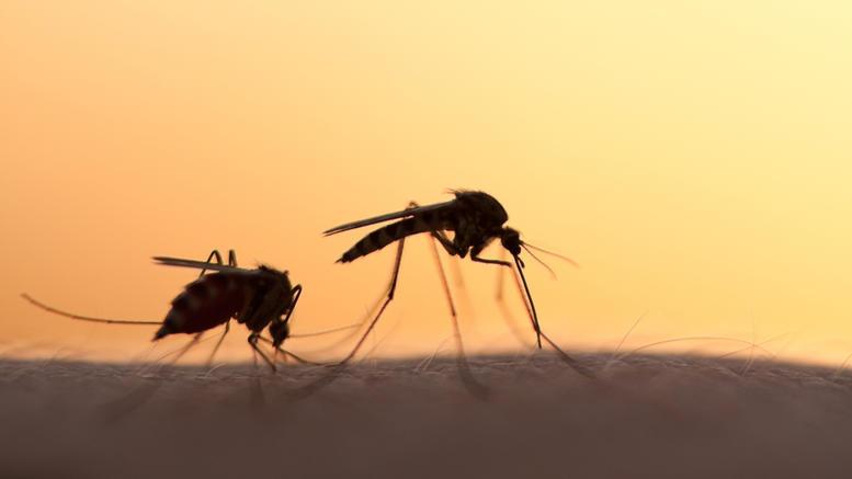 3.500 εστίες σε όλη την Κρήτη στο πρόγραμμα καταπολέμησης κουνουπιών