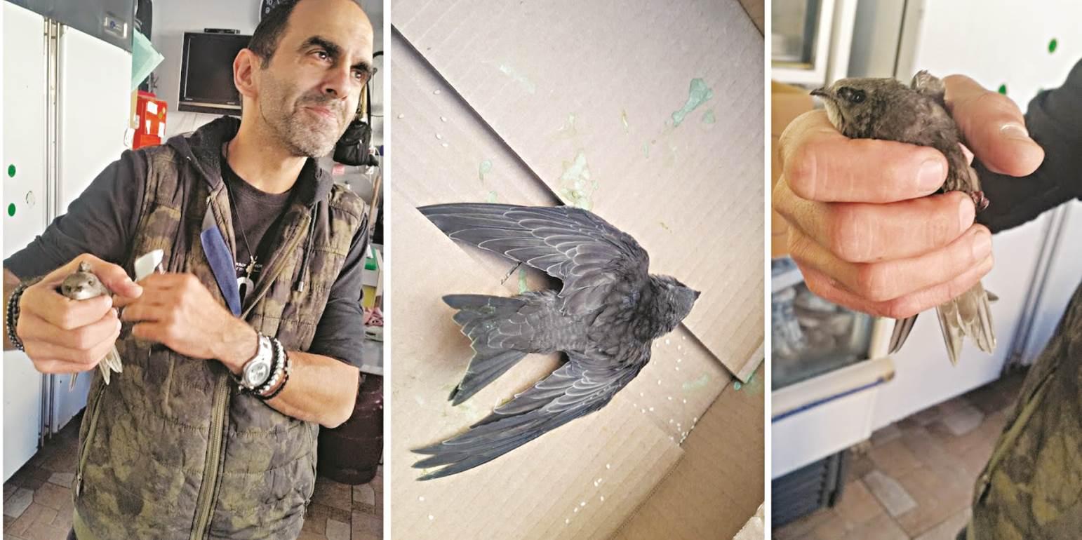 Ηρακλειώτης... «υιοθέτησε» μωρό πτηνό
