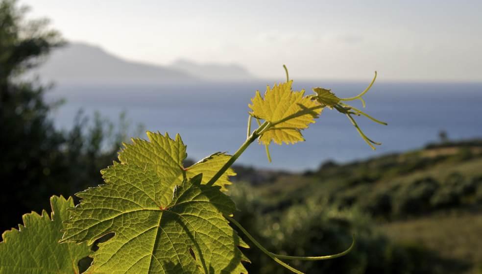 «Xρυσάφι» τα κρητικά αμπελόφυλλα με κέρδος έως και 30.000 ευρώ