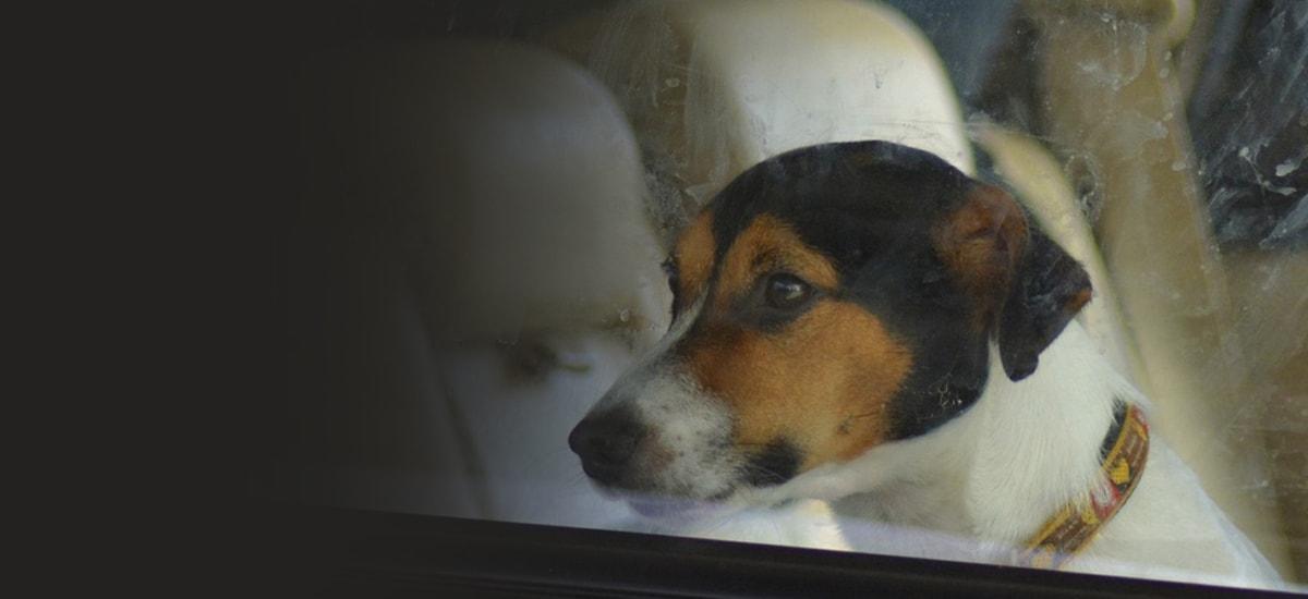 Κλείδωσε το σκύλο της στο αμάξι και έφυγε