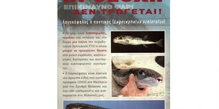 Ο Λαγοκέφαλος δεν τρώγεται!!!