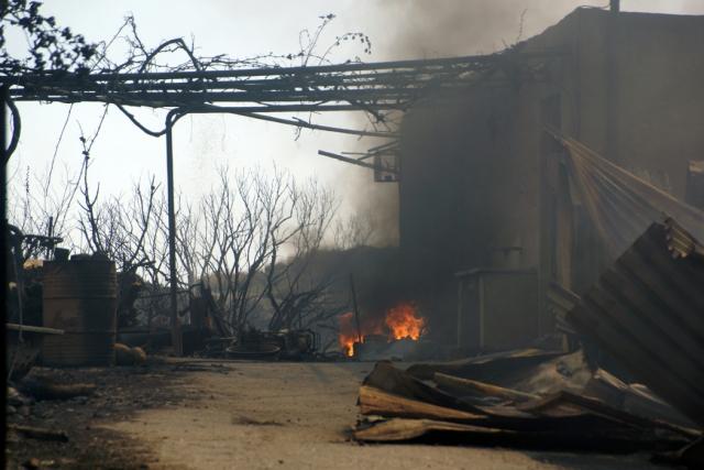 Κρήτη: Κάηκαν ζωντανά τρία σκυλιά από φωτιά σε στάβλο...