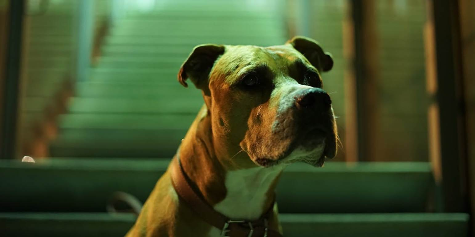 Bόλος: Γυναίκα κατασπαράχθηκε από τον σκύλο της