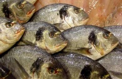 Φάτε ψάρια μία φορά την εβδομάδα για καλή υγεία