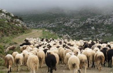 Ψάχνουν λύση για την ανεξέλεγκτη βόσκηση στον Ορεινό ογκο της Θρύπτης