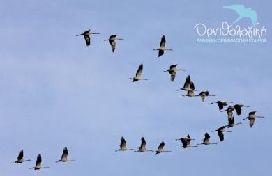 Γιορτή πουλιών στο πανέμορφο τοπιο του Αποσελέμη