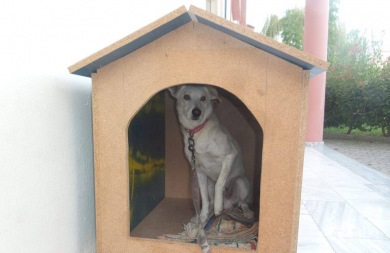 Το 1ο Λύκειο Γιαννιτσών υιοθέτησε έναν αδέσποτο σκύλο