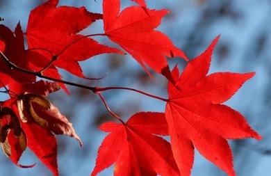 Το φθινόπωρο είναι... εδώ - Η αναλυτική πρόγνωση του καιρού