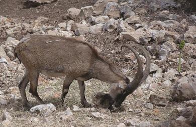 Τα σπάνια ζώα της Κρήτης που απειλούνται με εξαφάνιση