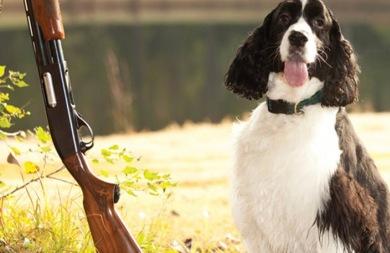 Σκύλος... πυροβόλησε το αφεντικό του!